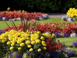 south-jersey-landscape-contractor