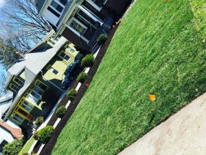 Lawn Maintenance South Jersey
